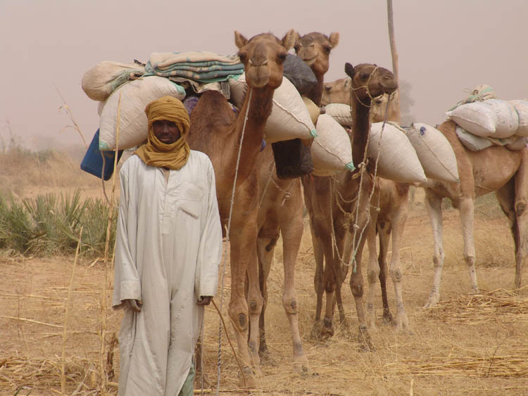 Excellent Caravan Of Camels Pictures To Pin On Pinterest