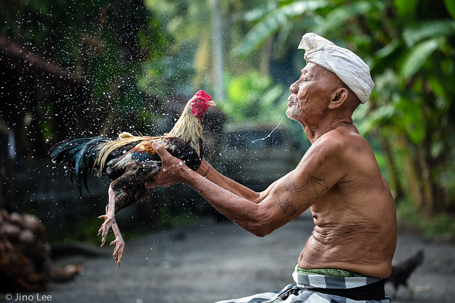 cockfighting1